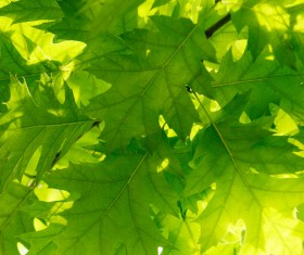 Green leaves Stock Photo 02