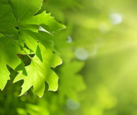 Green leaves Stock Photo 04