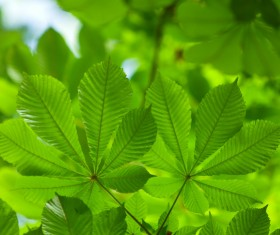 Green leaves Stock Photo 08