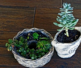 Green plant potted plants HD picture 04