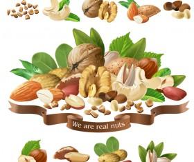 Nuts labels vector 02
