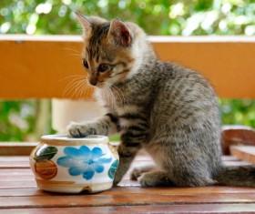 Pet kitten Stock Photo