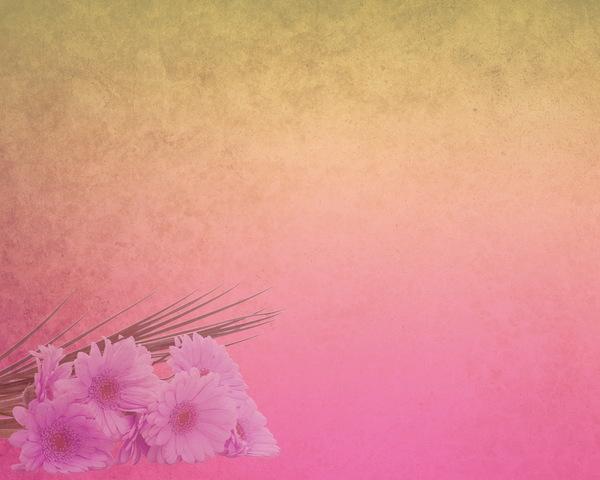 pink hd elegant background stock photo free download