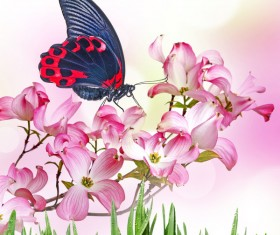 Pink Tropical Flower Butterfly Stock Photo