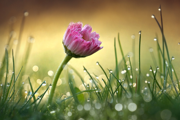 Rain In The Flower HD Picture Free Download