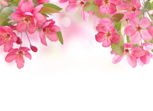 Red flowers background Stock Photo free download