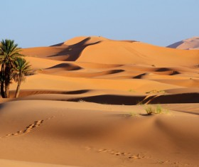 Sahara desert little green Stock Photo 01