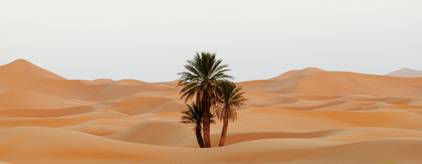 Sahara desert little green Stock Photo 02