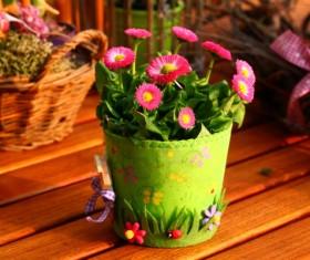 Small daisy potted plants Stock Photo