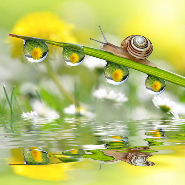 Snail and water Stock Photo