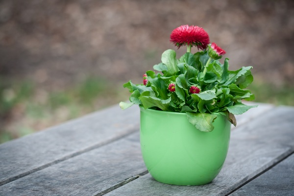 Spring potted flowers stock photo flowers stock photo free download spring potted flowers stock photo mightylinksfo Image collections