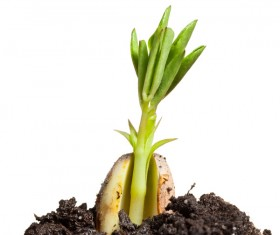 Sprout Stock Photo 05