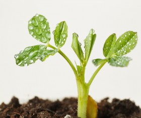 Sprout Stock Photo 07