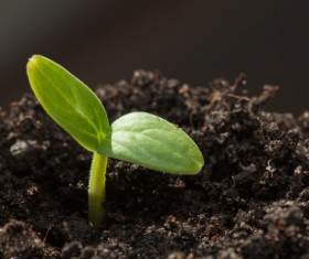 Sprout Stock Photo 10