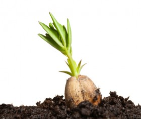 Sprout Stock Photo 14