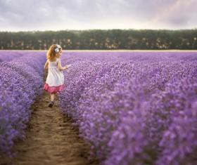 The little girl running on lavender farmland Stock Photo 01