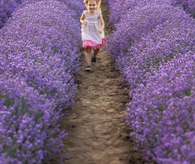 The little girl running on lavender farmland Stock Photo 03