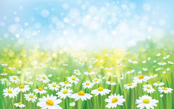 White Daisies With Spring Backgrounds Vector Set 05