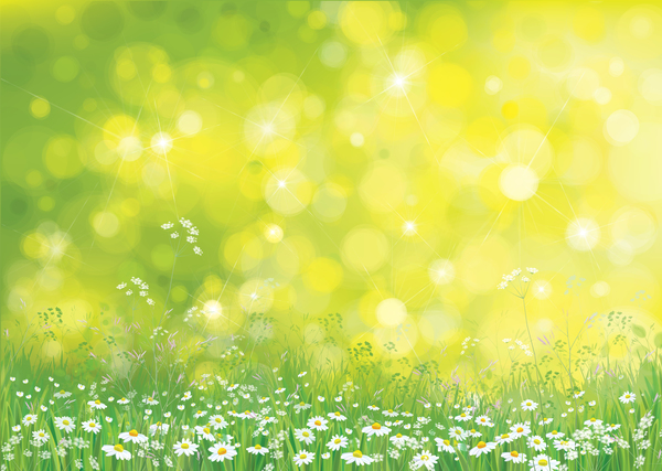 White Daisies With Spring Backgrounds Vector Set 09