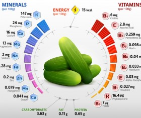 cucumber vitamins infographics vector