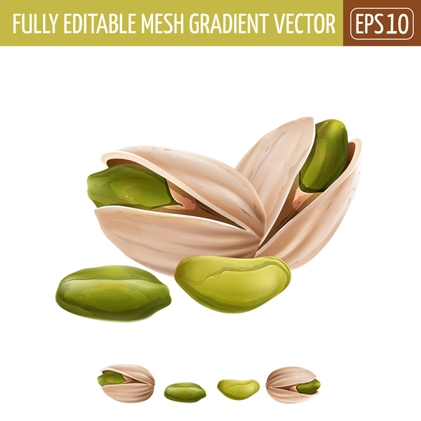 Pistachio Realistic Vectors Vector Food Free Download