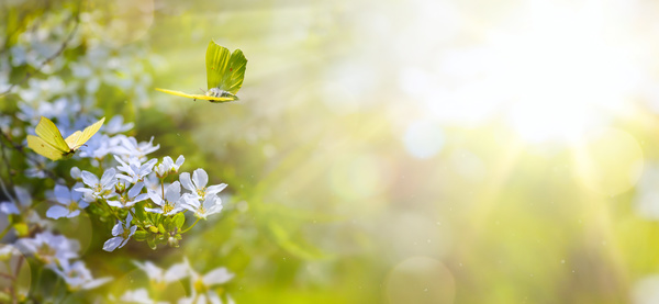 spring flower background yellow butterfly hd picture 01