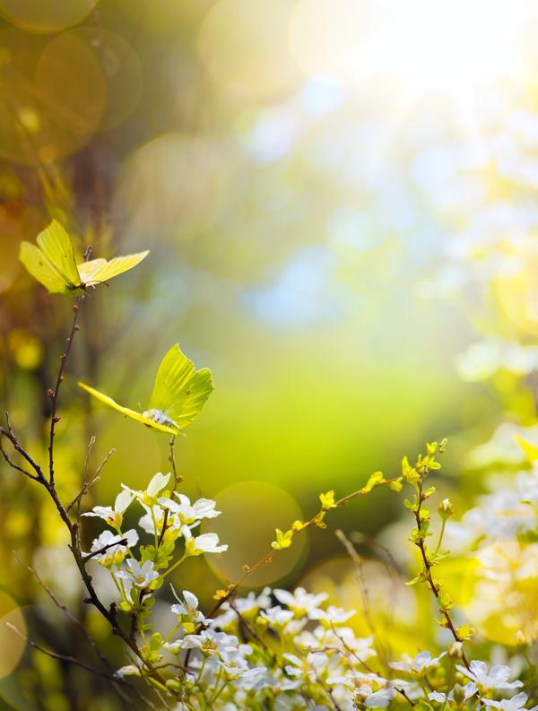 Spring flowers vector free vector download Free vector