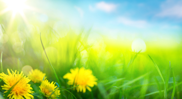 spring flower background yellow butterfly hd picture 06