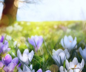 spring flower background, yellow butterfly HD picture 12
