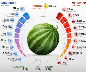 watermelon vitamins infographics vector