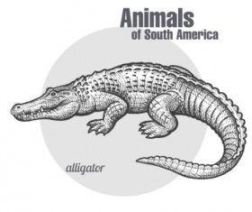 Alligator hand drawing sketch vector