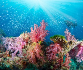 Beautiful coral reefs with colorful seabed Stock Photo