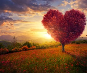 Beautiful scenery heart tree Stock Photo 01