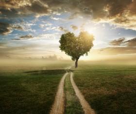Beautiful scenery heart tree Stock Photo 03