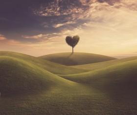 Beautiful scenery heart tree Stock Photo 04