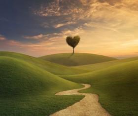 Beautiful scenery heart tree Stock Photo 05