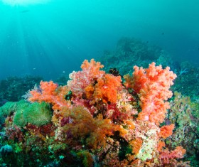 Beautiful underwater coral reefs Stock Photo