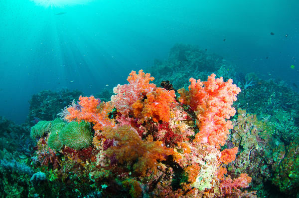 Beautiful underwater coral reefs Stock Photo - Nature ...