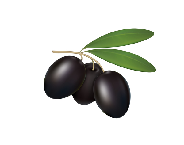 Black olives on white background vector