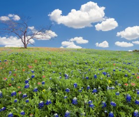 Blue sky and white clouds and wild flowers Stock Photo