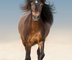 Brown horse running Stock Photo