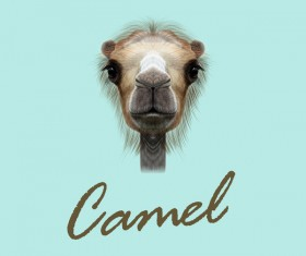 Camel head vector illustration 01