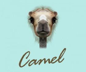 Camel head vector illustration 01