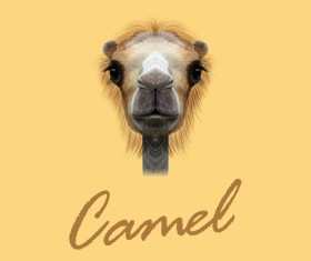 Camel head vector illustration 02