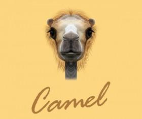 Camel head vector illustration 02