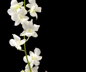 Close-up of white orchids Stock Photo