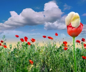 Clouds and red poppies Stock Photo