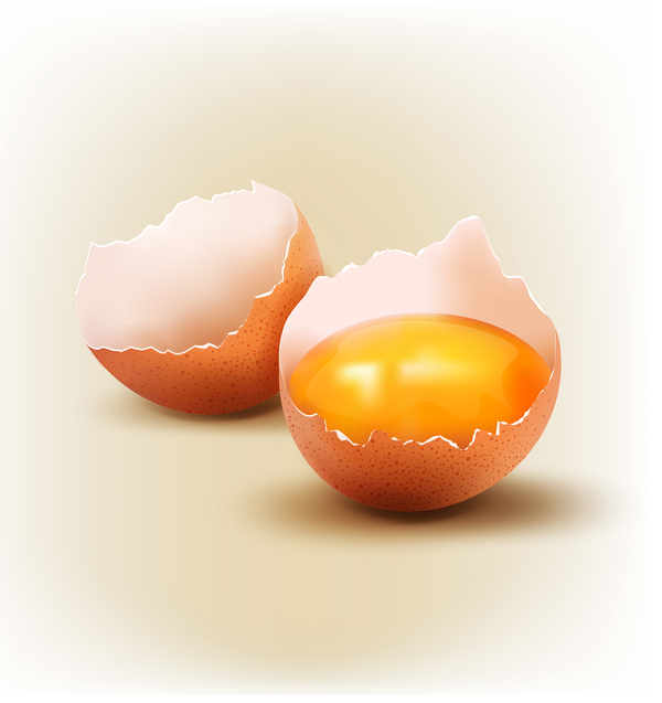 Cracked shells with eggs vector 02