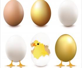 Cute chick with broken eggs vector