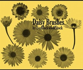 Daisy PS brushes